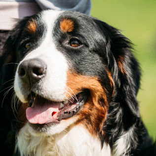 Pet Spa, Dog Grooming: Elizabeth, Castle Rock, CO: Elizabeth